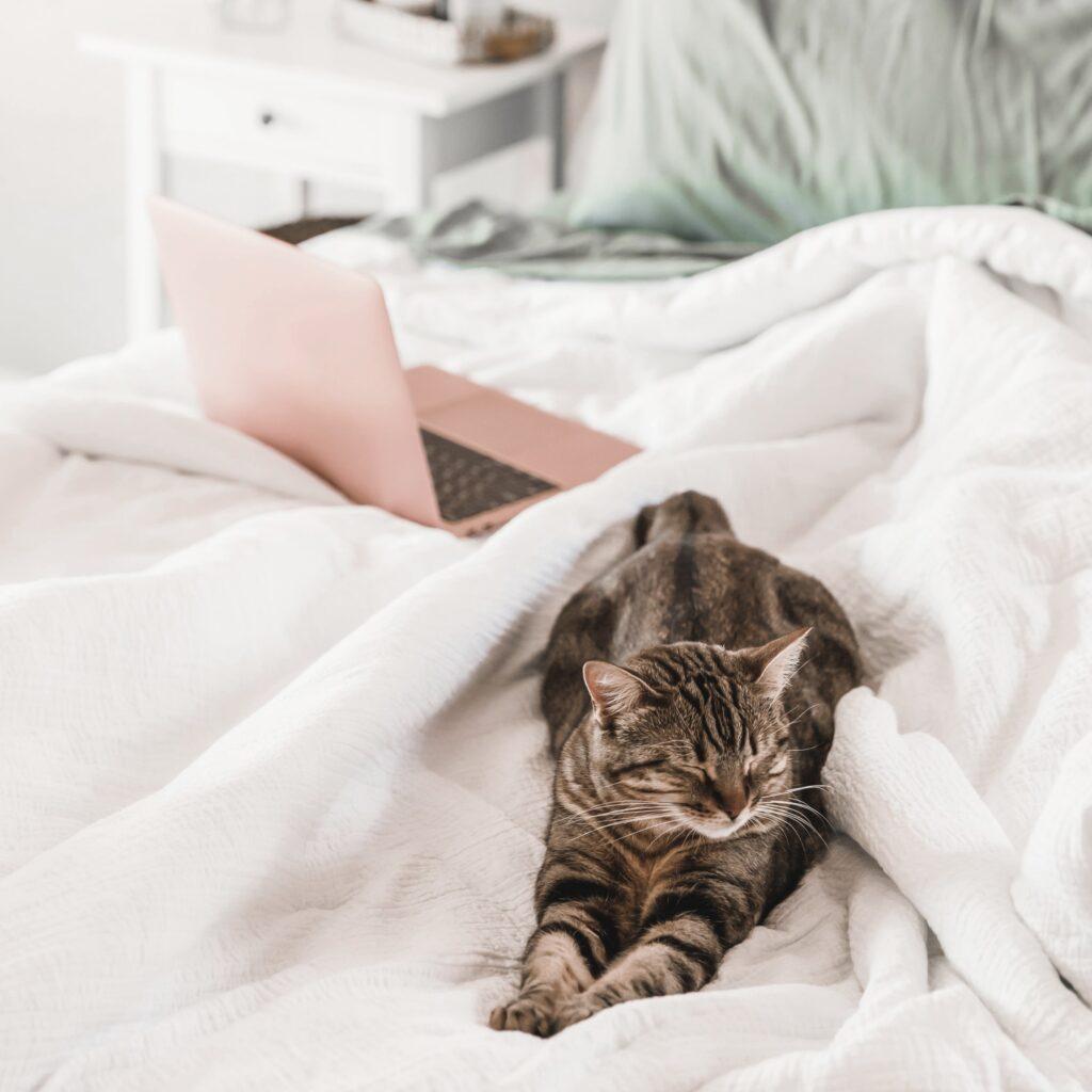 Katze und rosafarbener Laptop auf Bett